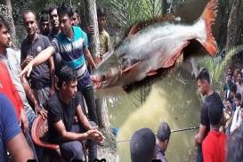 এবার পুকুরে বাঘা বাঘা 'মাছ শিকার' মোস্তাফিজের